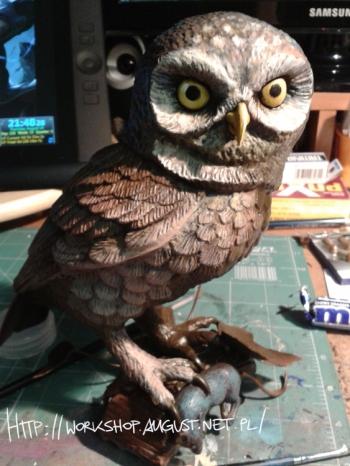 little_owl_01